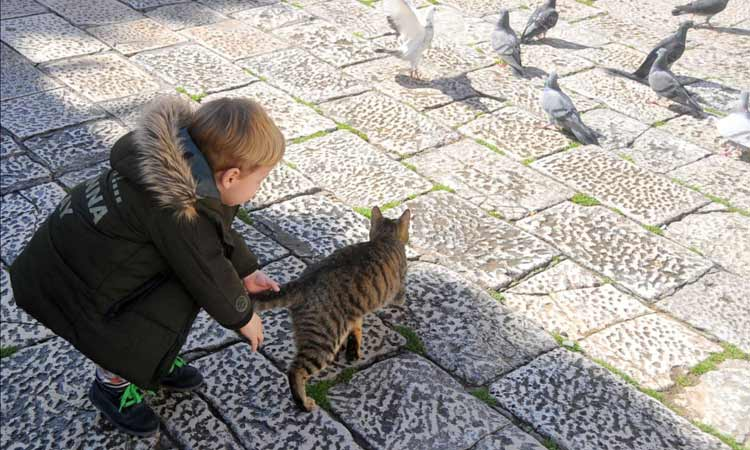 cat and pigeons dubrovnik 2018 2