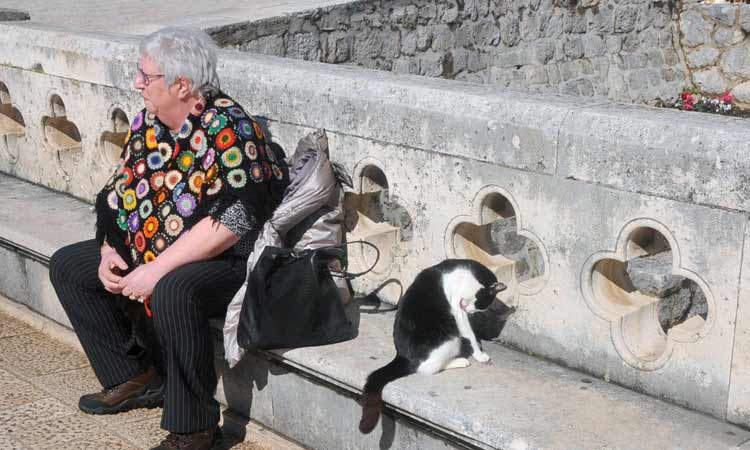 cat in dubrovnik sunshine 2018 22