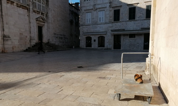 cat on barrow in dubrovnik 2020
