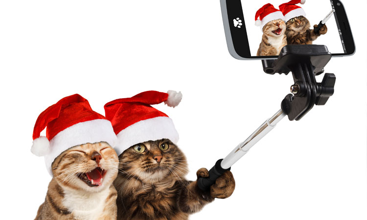 christmas cats selfie