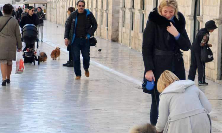 dogs on stradun 2018 croatia