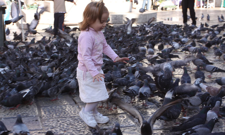 dubrovnik pigeons child