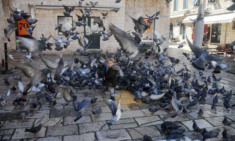 pigeons with child in dubrovnik 2018