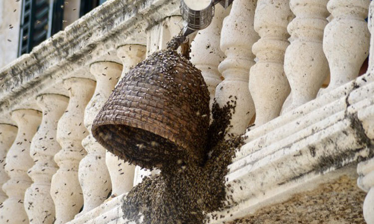 pucic palace bees