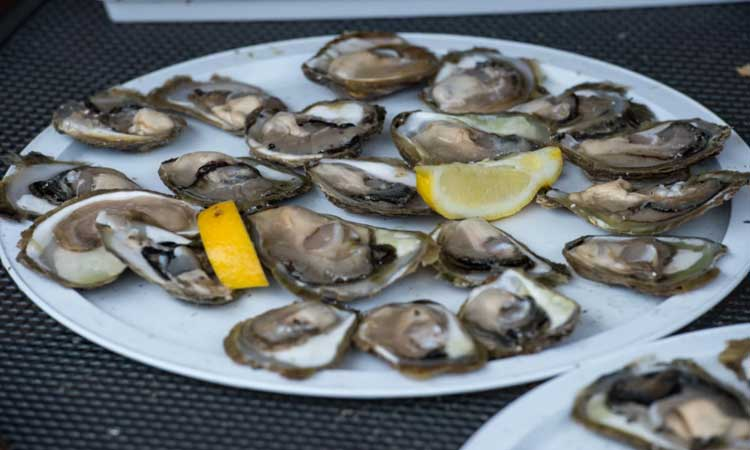 ston oysters 2018 5