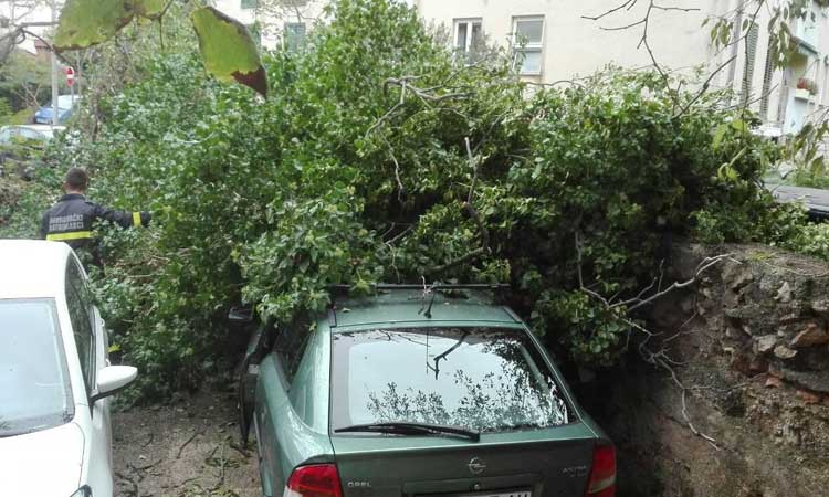 trees down on car