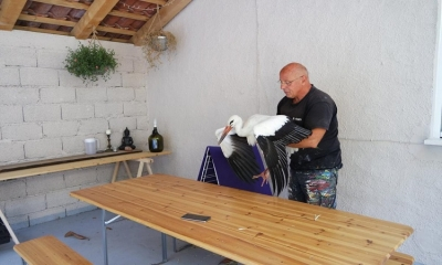 Stork surprises Dubrovnik painter