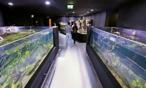 Croatia gets first ever freshwater aquarium