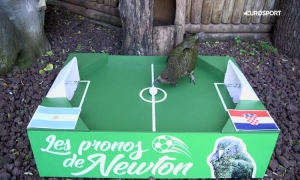 VIDEO - Newton the psychic parrot predicts Croatia-Argentina result