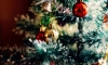 Worldwide Map Reveals the Most Popular Christmas Trees
