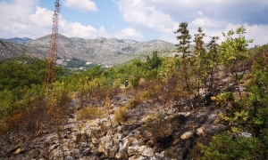 Dubrovnik firefighters in action again
