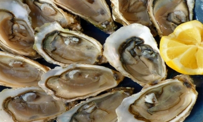 Ston oysters given the all clear after norovirus outbreak