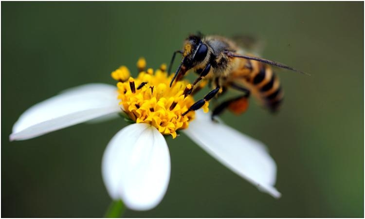 WORLD BEE DAY – Do you know how important they are?