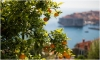 Neretva Days in Dubrovnik – buy the yummiest mandarins in the world on Pile