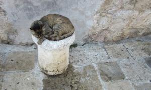 Over 1,000 Dubrovnik street cats sterilized since 2018