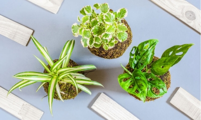 It is International Houseplant Appreciation Day today - what are the most effective houseplants at removing CO2