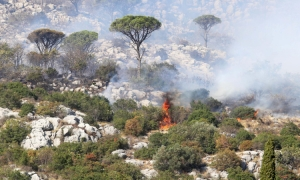 Fire in Slivno destroys 4.5 hectares of pine forest
