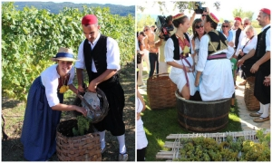 Pick grapes and make wine like a local in Konavle