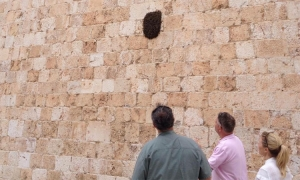 Tourists surprised to see bees in Dubrovnik