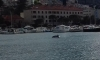 Dolphin plays in busy Dubrovnik harbour
