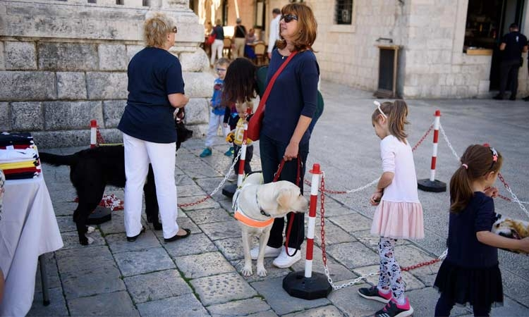 Guide dogs prove an attraction