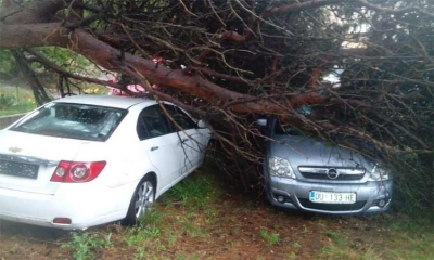 Tree traps woman in car