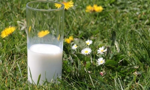 Croatian milk production drops from 65,000 to only 6,000 in just over ten years