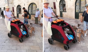 Dog lover with special pram