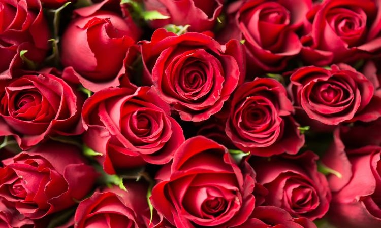 LOVE IS IN THE AIR: Over million roses imported to Croatia in February