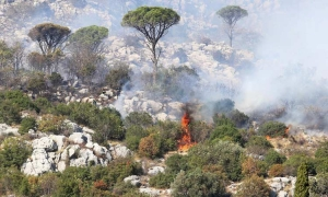 Forest fires in Konavle – two firefighting planes in action