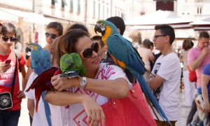 Parrots moved from the Old City as city authorities clean up the streets