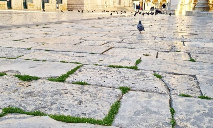 Grass on Dubrovnik streets