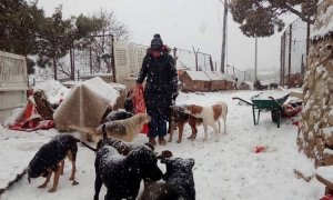 You can help give these five Dubrovnik dogs a brighter future