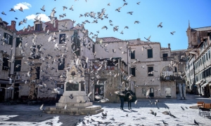 PHOTO - The pigeons of Dubrovnik