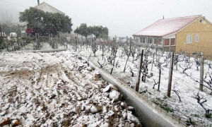 Snow covered vineyard in Zupa