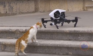 VIDEO - Dubrovnik cat attacks drone