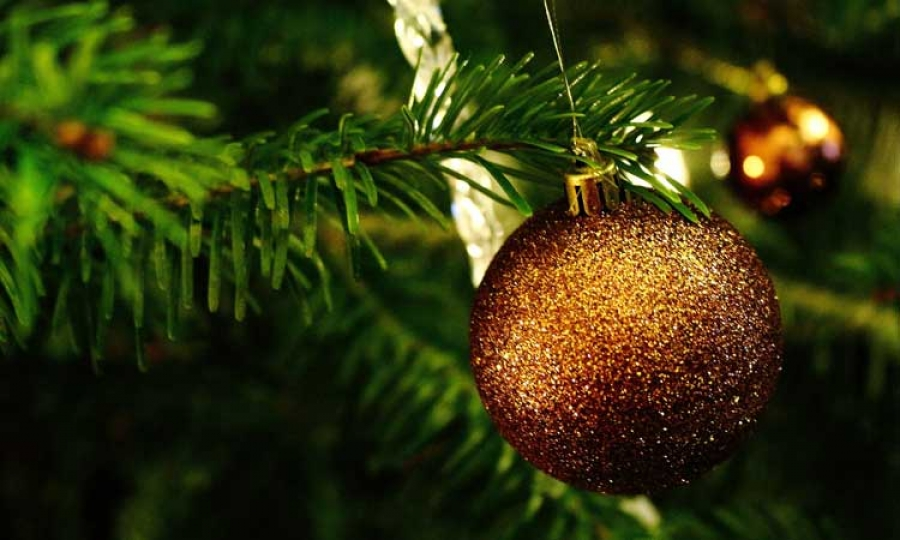 Danish Imported Christmas Trees To Decorate Many Croatian