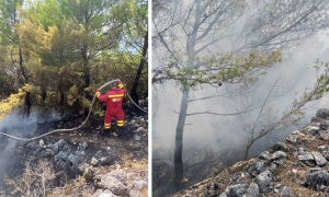 Forest fire breaks out on the island of Lopud