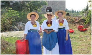 UNIQUE EXPERIENCE: Pick grapes and make wine in Konavle