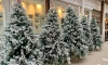 Croatia imported €215,000 worth of Christmas trees last year