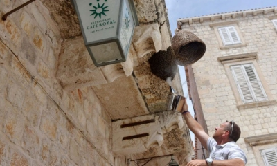 Bees swarm on Dubrovnik hotel